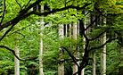 Norwegian Wood OK, and Pretty