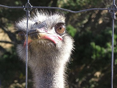 Chinese Media's Ostrich Policy