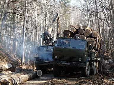 Russia's Far East Forest Mafia
