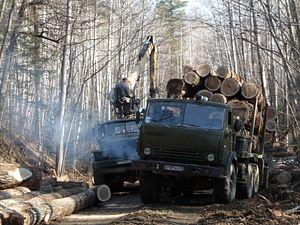Russia's Far East Forest Mafia