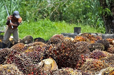 Palm Oil Diplomacy