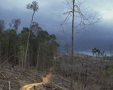 Inside Indonesia's 'Burning Forests'