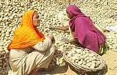 India Moves on Food Security