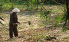 Vietnam's Land Hero