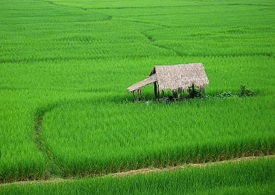 Thailand's Rice Exports Hit 12-Year Low