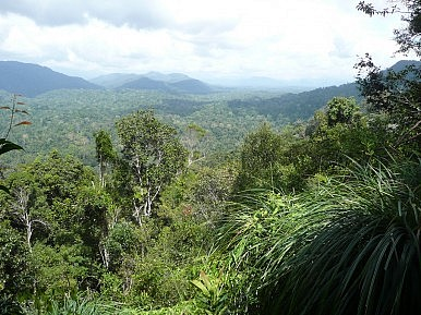 Saving Malaysia's Last Great Rainforests
