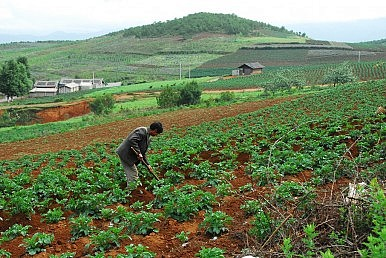 No Farmer Left Behind in China