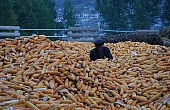 North Korea Pushes Ahead on Agricultural Reforms