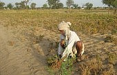 Why Do So Many Indian Farmers Commit Suicide?