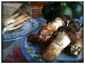 World's Largest Mushroom? 33-Pound Fungus Found in China