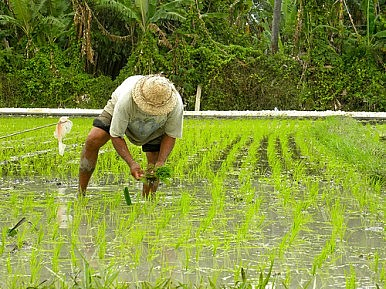 Filipino Farmers Say No to GMO