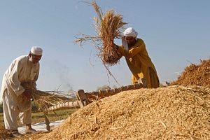Saving Afghanistan's Economy: The 1818 Model