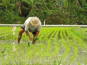 Filipino Farmers Say No to GMO