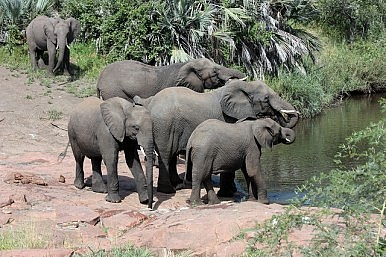 Blood Elephants: Asia's Ivory Demand Fuels African Conflicts