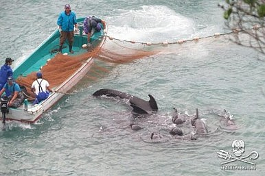 Taiji of The Cove Infamy Opens a Marine Park