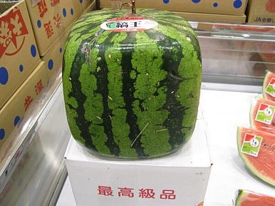Can $150 Melons Boost Japan's Post-TPP Agriculture Exports?