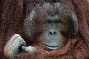 Indonesian Men Freed after Allegedly Killing, Eating Orangutan