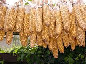 The Latest Threat to China-US Relations: GMOs
