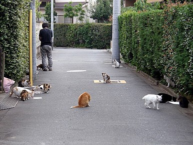 Cat Burglar: Unemployed Japanese Man Stole $185,000 to Feed Feline Friends