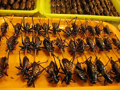 Cricket Casserole Cambodia S Baked Insects Gain
