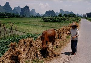 Pollution Threatens China's Food Security