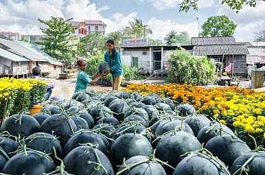 Vietnam: Back to Organic?