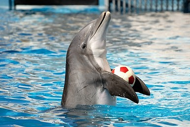 Pakistan's Controversial Dolphin Show