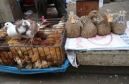 China's New Avian Flu Has