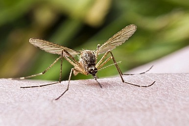 Dengue Fever on the Rise in Southeast Asia