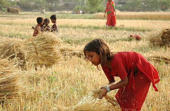 "essay on indian farmers Essay on ""an indian farmer"" complete essay for class 10, class 12 and graduation and other classes."