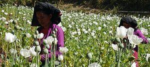 Myanmar Fighting a Losing Battle Against Opium Addiction