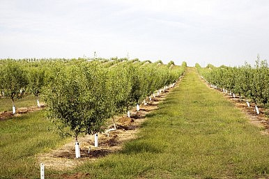 California Drought Means Higher Almond Prices for Asia