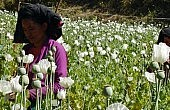 Myanmar Fighting a Losing Battle Against Opium Addiction