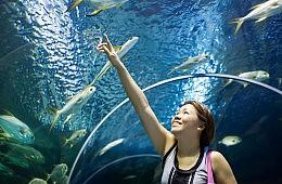 'World's Largest Aquarium' Just One Superlative at China's Hengqin Ocean Kingdom