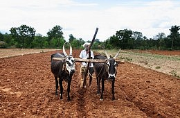 Can India Reform Its Agriculture?