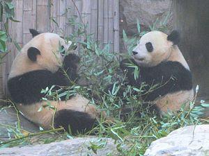 China Woos South Korea With Pandas