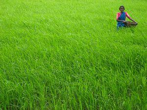Devinder Sharma on India's Agriculture Crisis