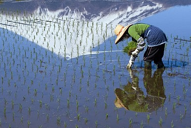 The TPP and Japanese Agriculture