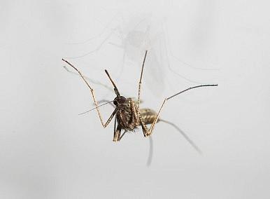 Drug-Resistant Malaria: The World's Next Health Crisis?