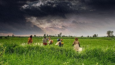India's Dangerous Food Subsidies