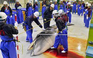 Japan: Let Them Eat Whale