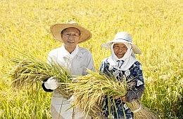Japan's Agriculture Dilemma