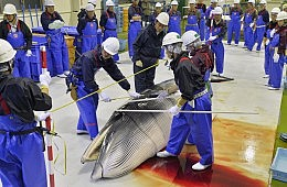 Japan: Let Them Eat Whale