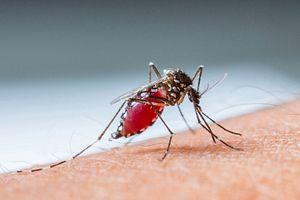 Zika Virus Hits Vietnam