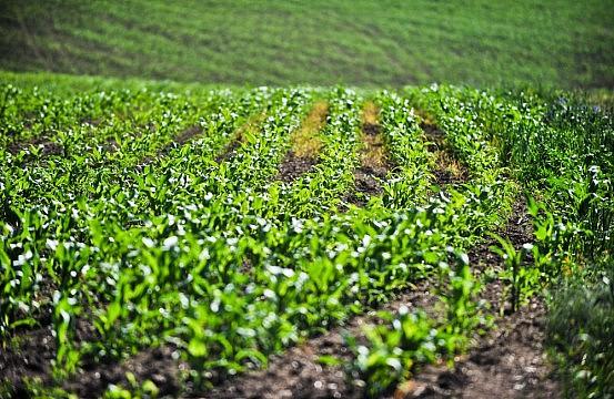 Vietnam, Agent Orange, and GMOs