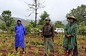 Can Coffee Replace Opium in Southern Shan State?