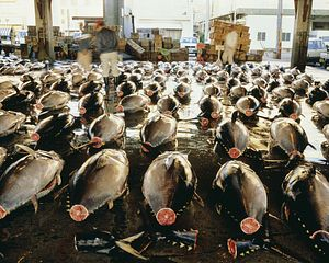 Disappointing Outcome at Pacific Fisheries Meet