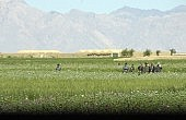 A Solution for Afghanistan's Opium Crisis?