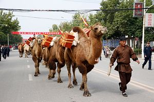 The New Silk Road and the Power of Ideas