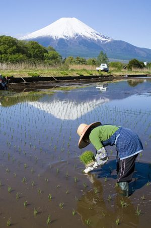 Agricultural Reforms in Japan Pave the Way for TPP